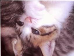 catsexy